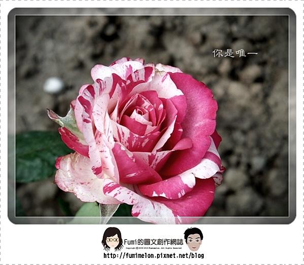 花朵物語-你是唯一