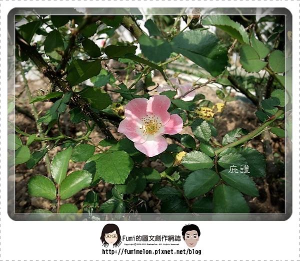 花朵物語-庇護