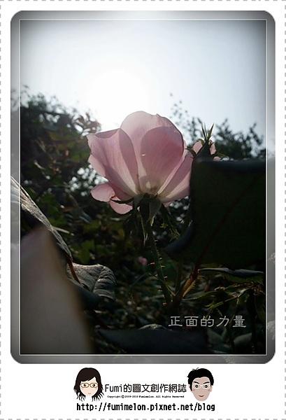 花朵物語-正面的力量
