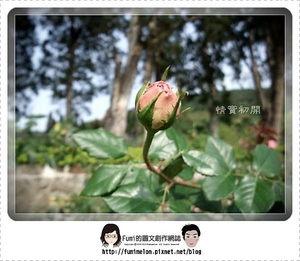 花朵物語-情竇初開