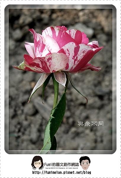 花朵物語-與眾不同