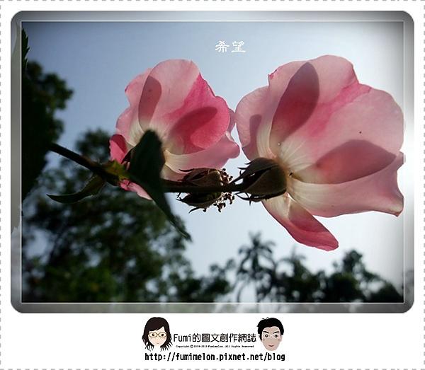 花朵物語-希望