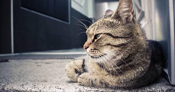 貓-1140x600.jpg
