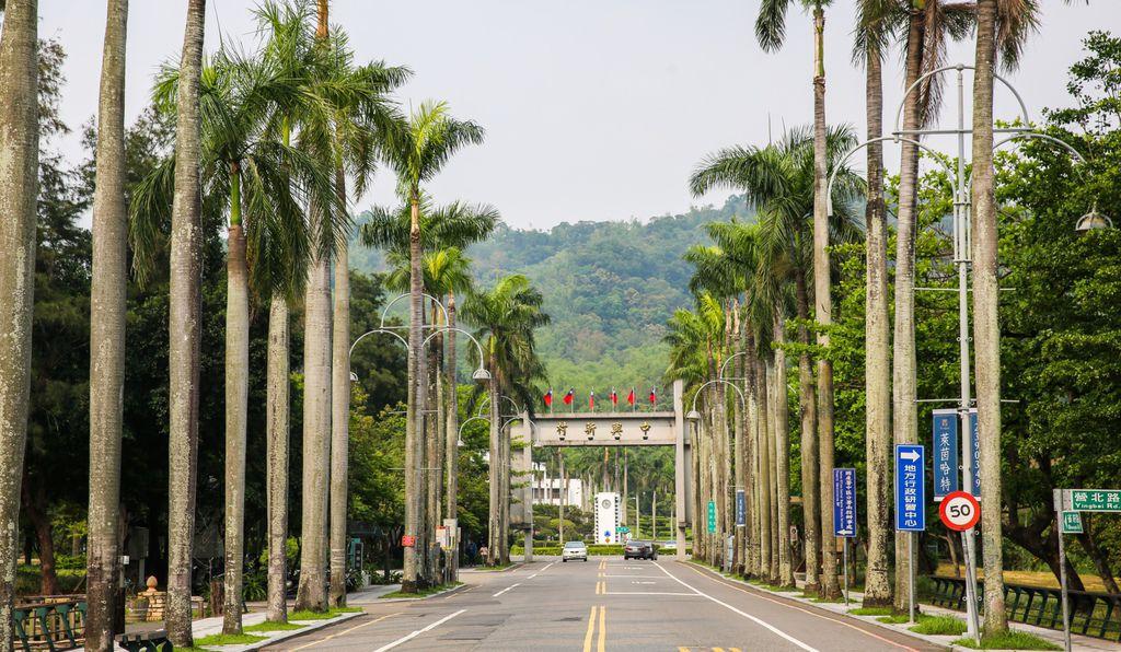 1-中興新村入口-椰林大道.jpg