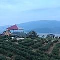 茶鄉園_20.jpg