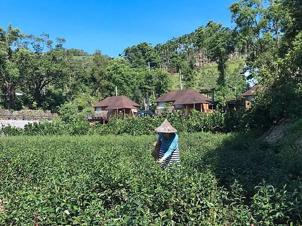 茶鄉園_47.jpg