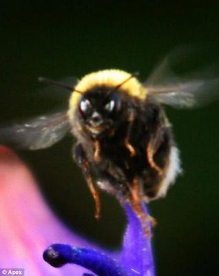 蜜蜂(笑).jpg