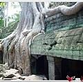 金色吳哥-塔普倫廟TaProhm-19