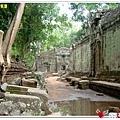 金色吳哥-塔普倫廟TaProhm-23