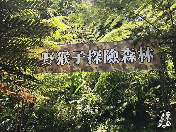 【花蓮│壽豐鄉】花蓮一日泰山傳奇,野猴子探險森林,樹冠層探險,森林樂園探險,壽豐,景點推薦