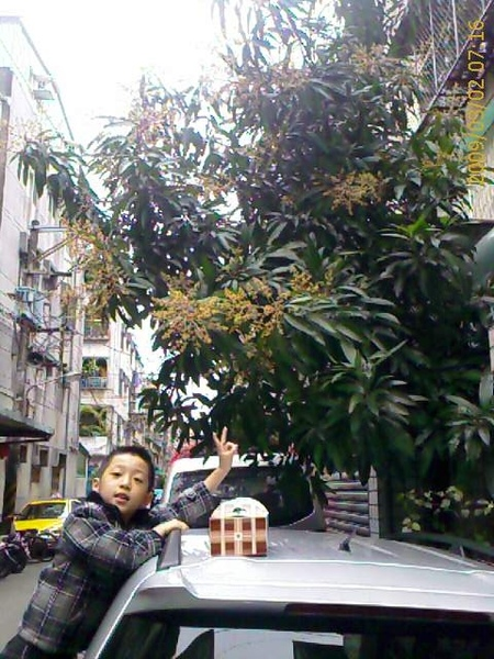 兒子跟芒果花.JPG