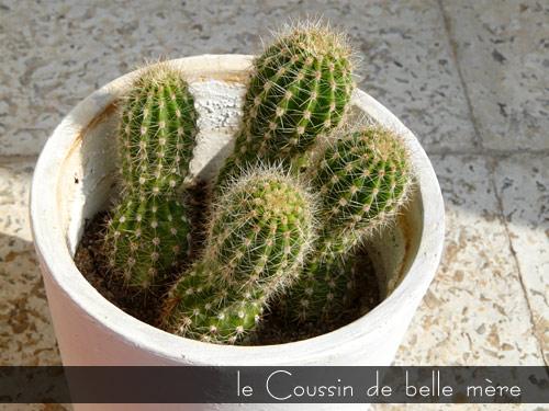 Coussin-de-belle-mere.jpg