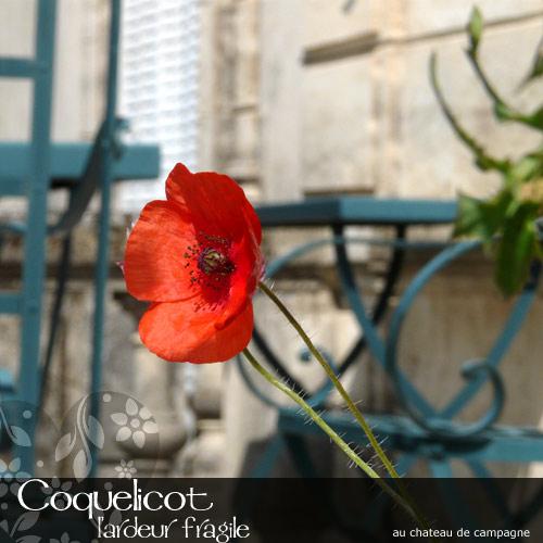 Coquelicot-1.jpg