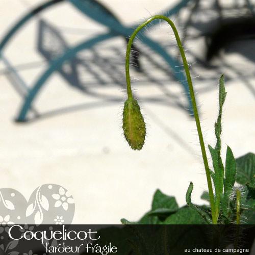 Coquelicot-3.jpg