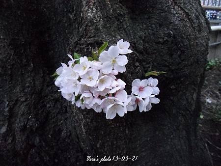tn_CIMG6683-9