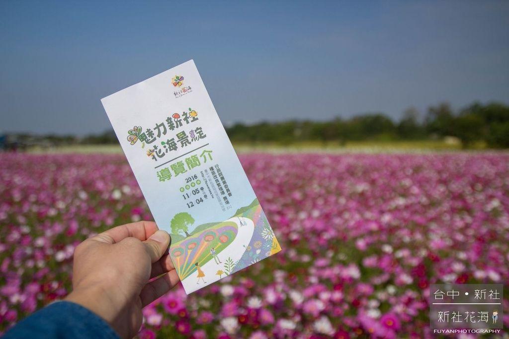 新社花海29