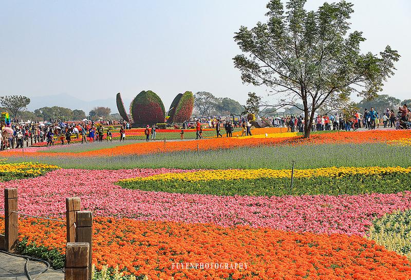 2017臺中國際花毯節45