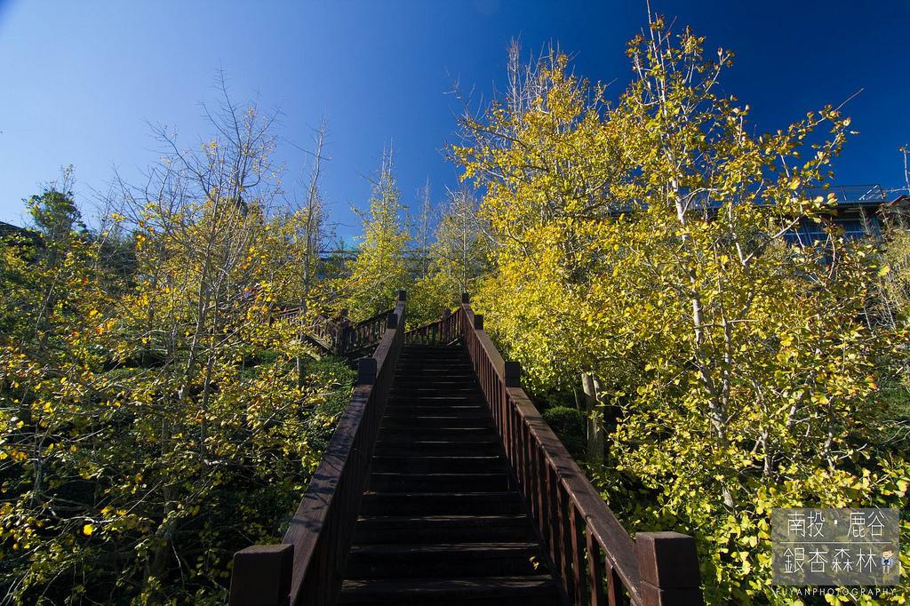 銀杏森林9