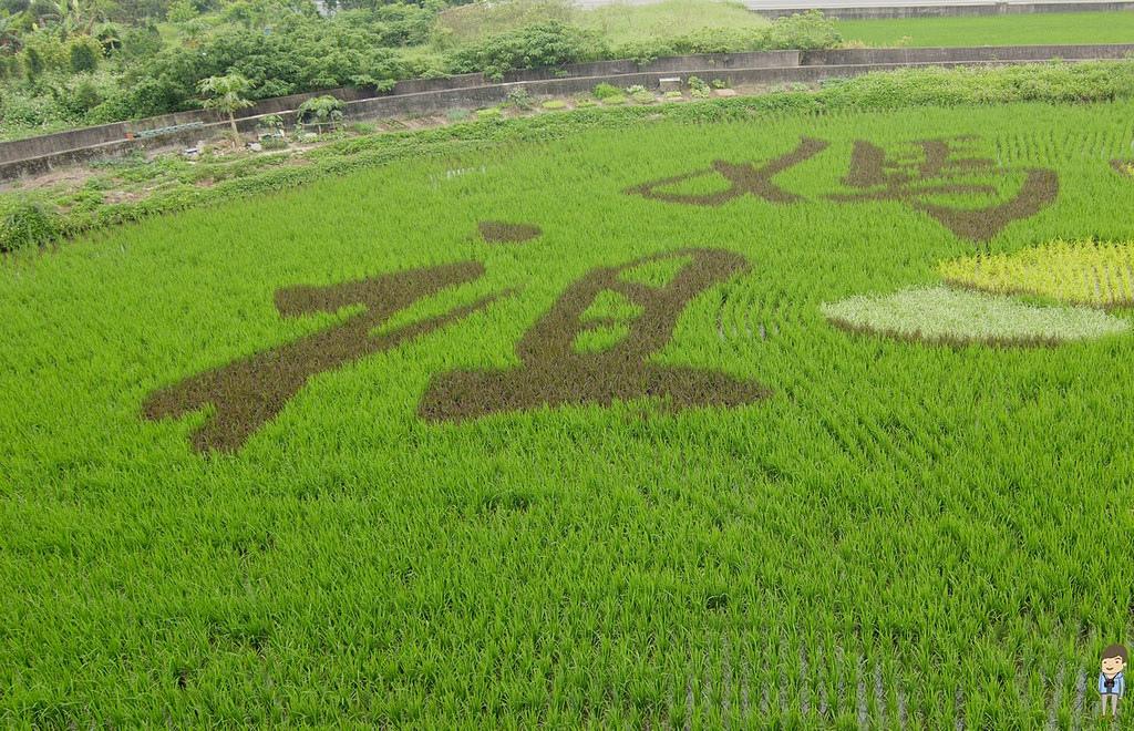 苑裡彩繪稻田 (3)