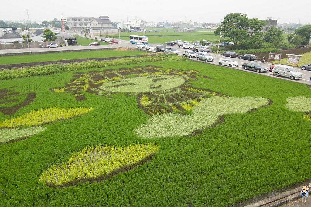 苑裡彩繪稻田 (10)
