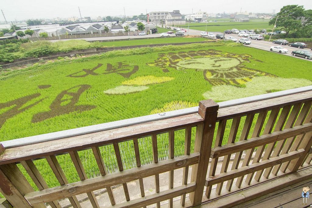 苑裡彩繪稻田 (11)