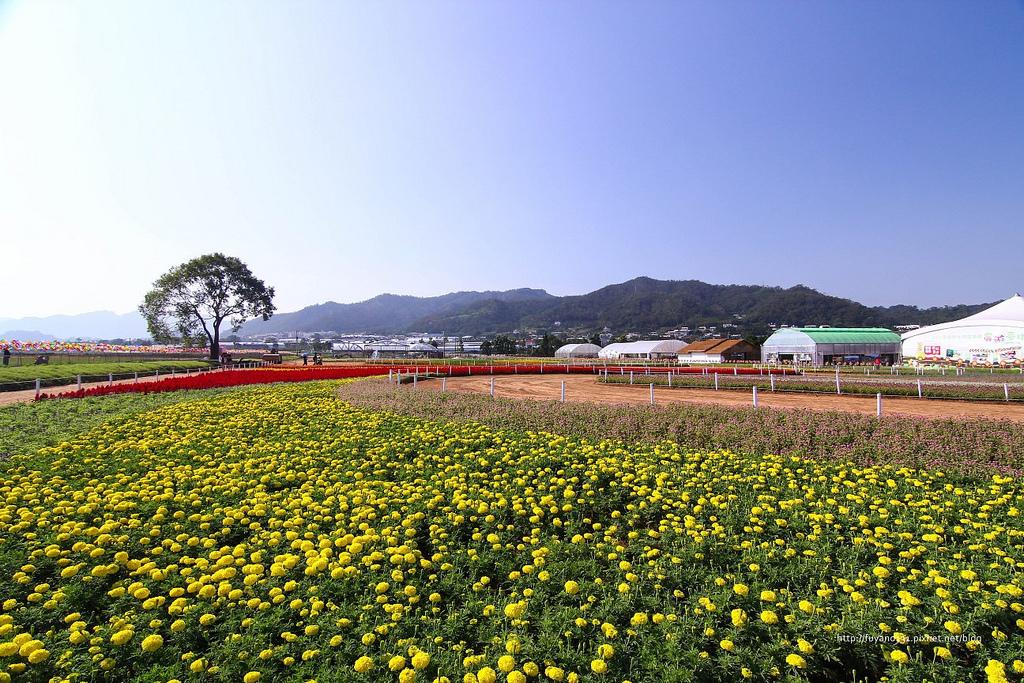 新社花海 (1)