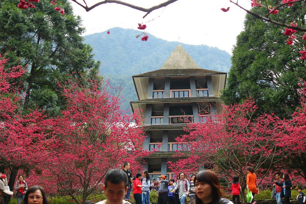 九族櫻花祭 (156)