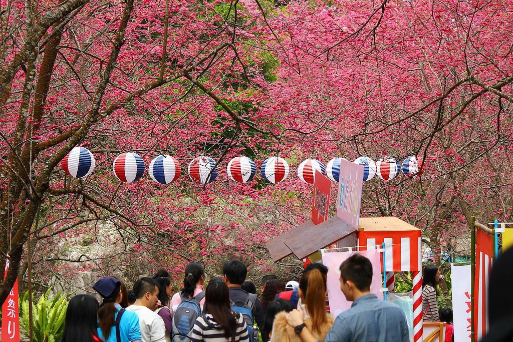 九族櫻花祭 (157)