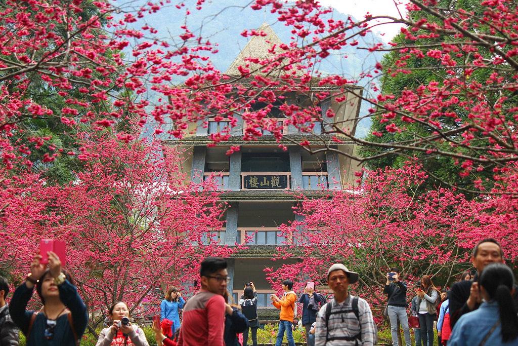 九族櫻花祭 (158)