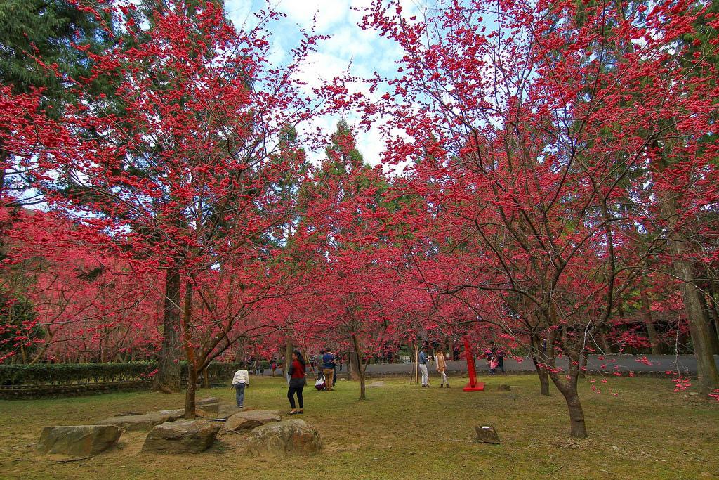 九族櫻花祭 (162)