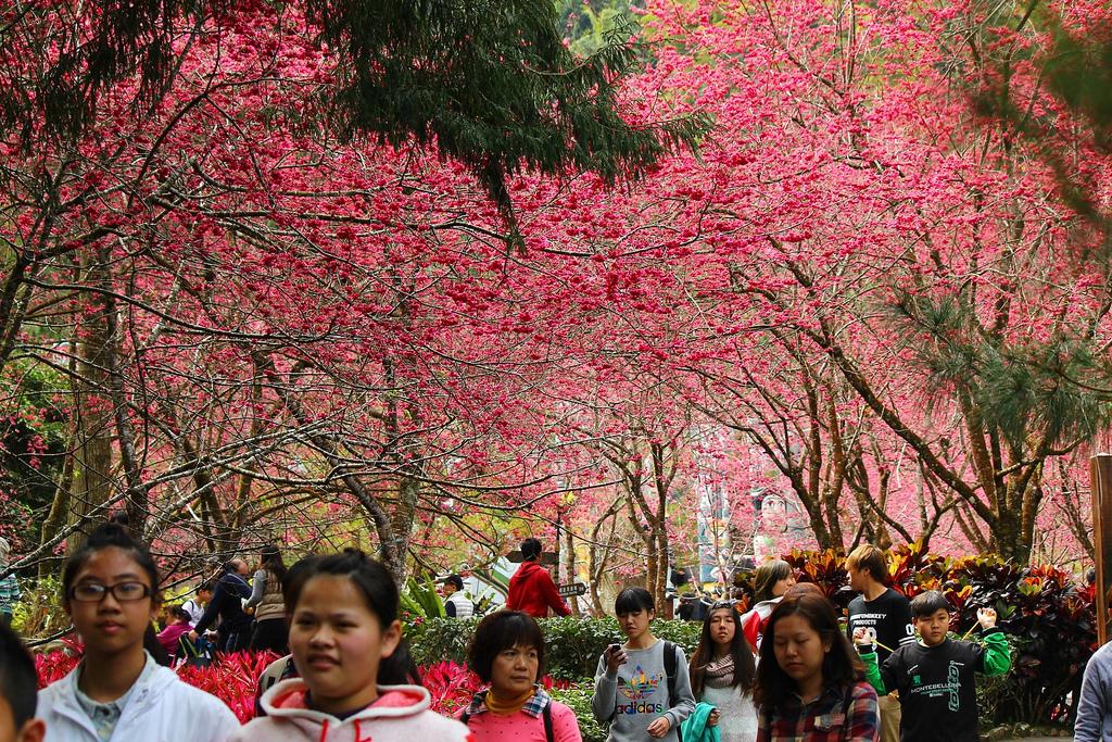 九族櫻花祭 (167)