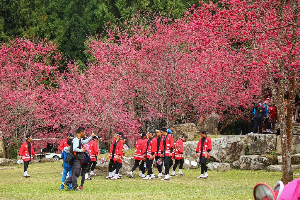 九族櫻花祭 (2)