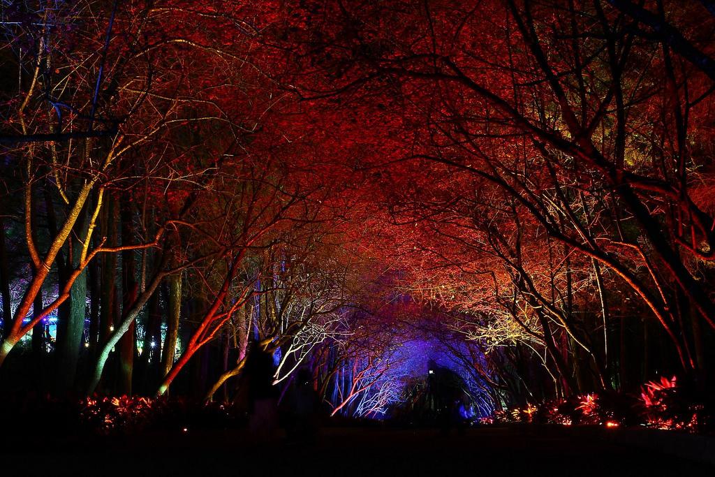 九族櫻花祭 (127)
