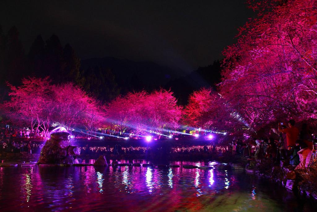 九族櫻花祭 (105)