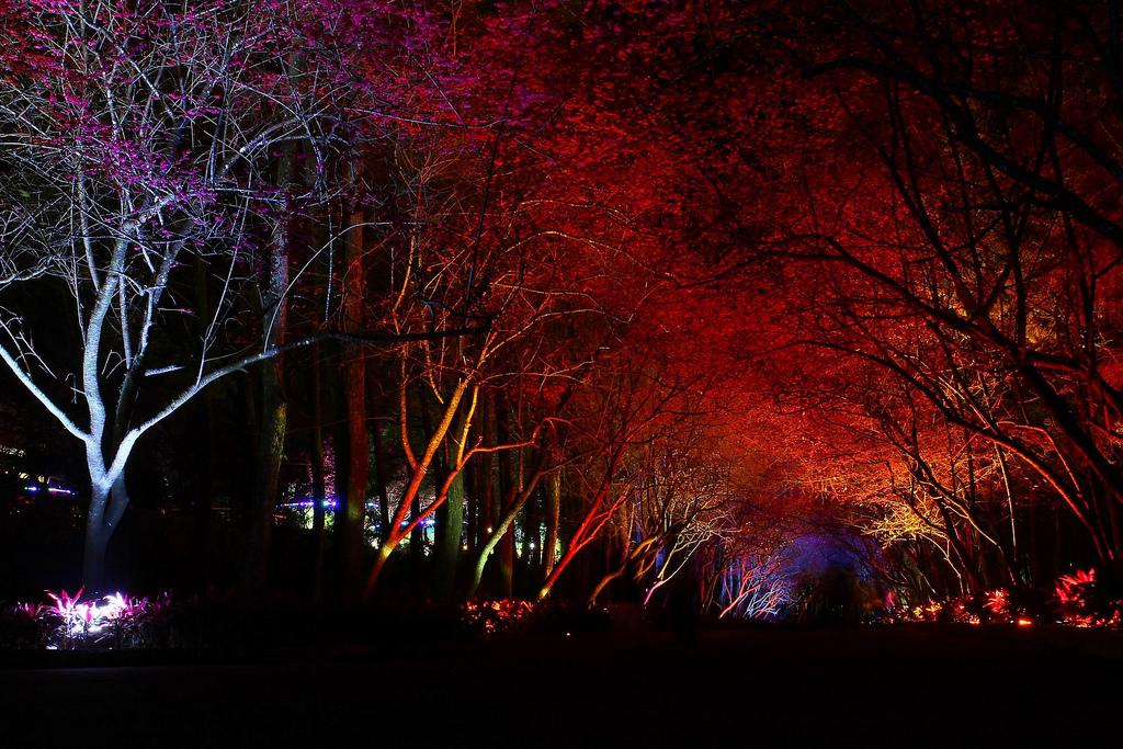 九族櫻花祭 (126)