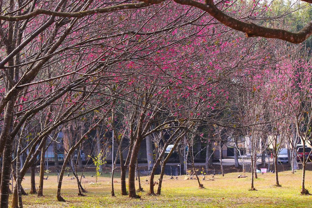 暨南大學 (54)