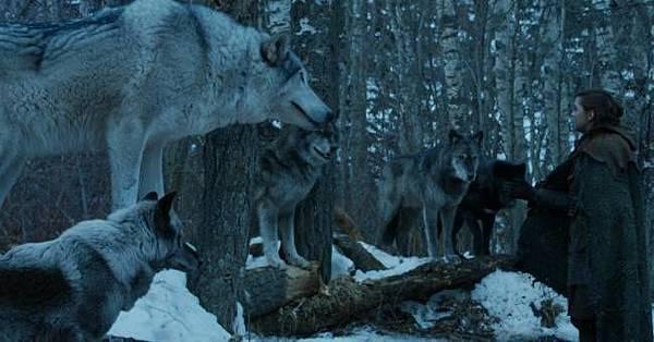 direwolf 1.jpg