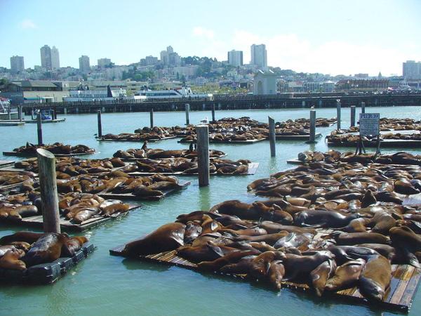 舊金山漁人碼頭1