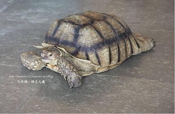 勻淨湖湖光早餐 (5)