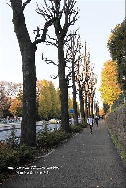 明治神宮外苑銀杏賞 (2)