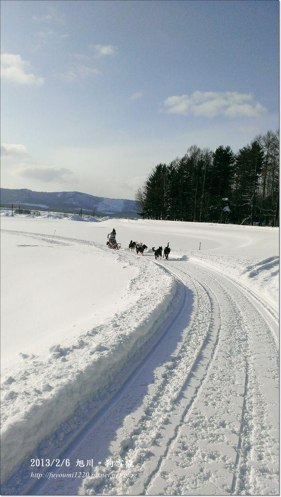 狗雪橇 (7)