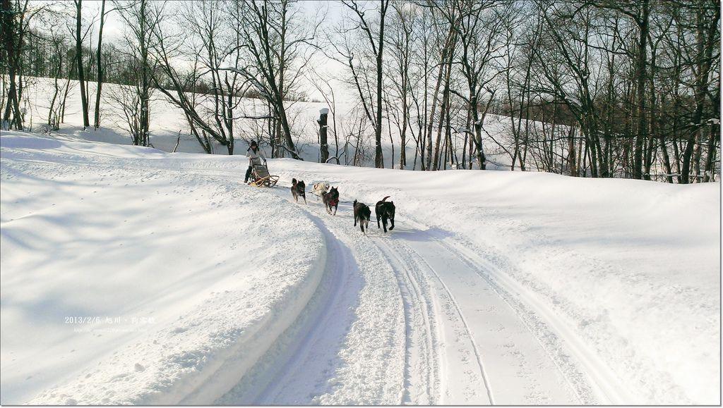 狗雪橇 (9)