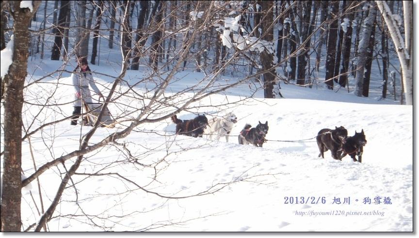 狗雪橇 (17)