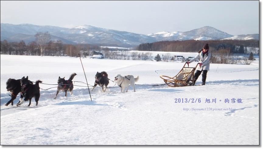 狗雪橇 (18)