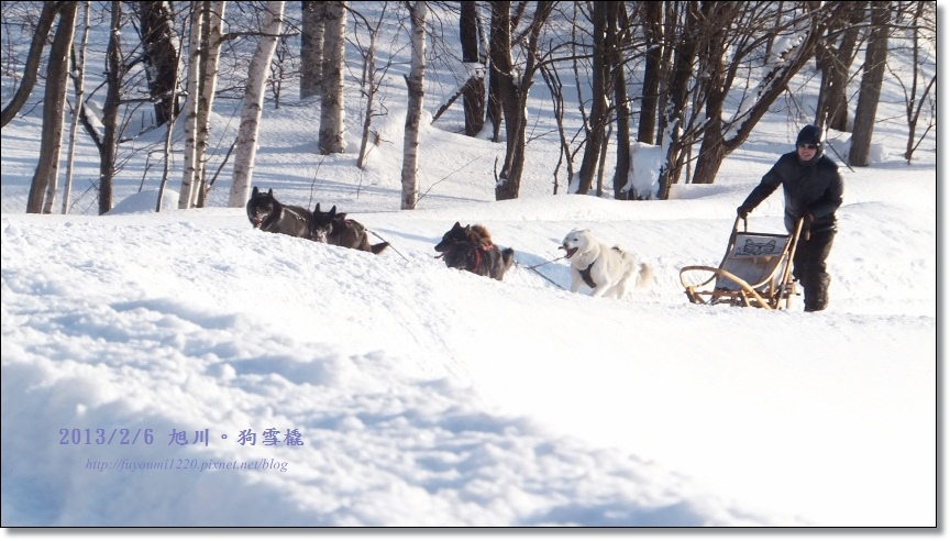 狗雪橇 (21)