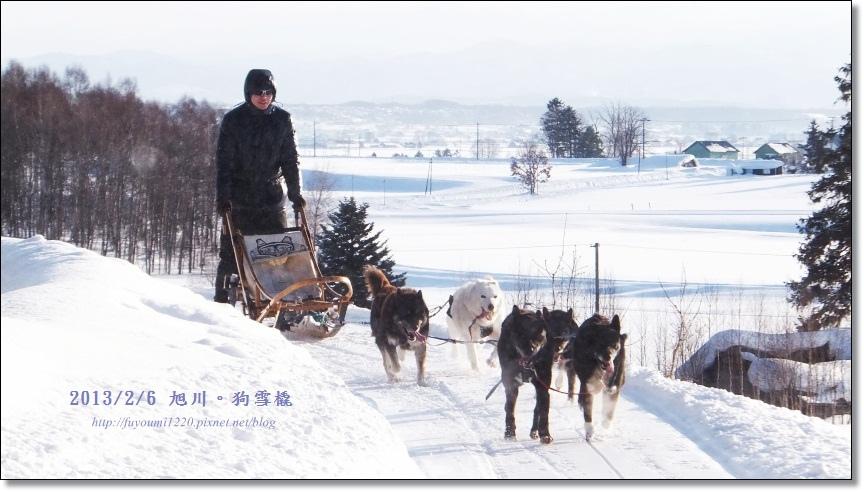 狗雪橇 (20)