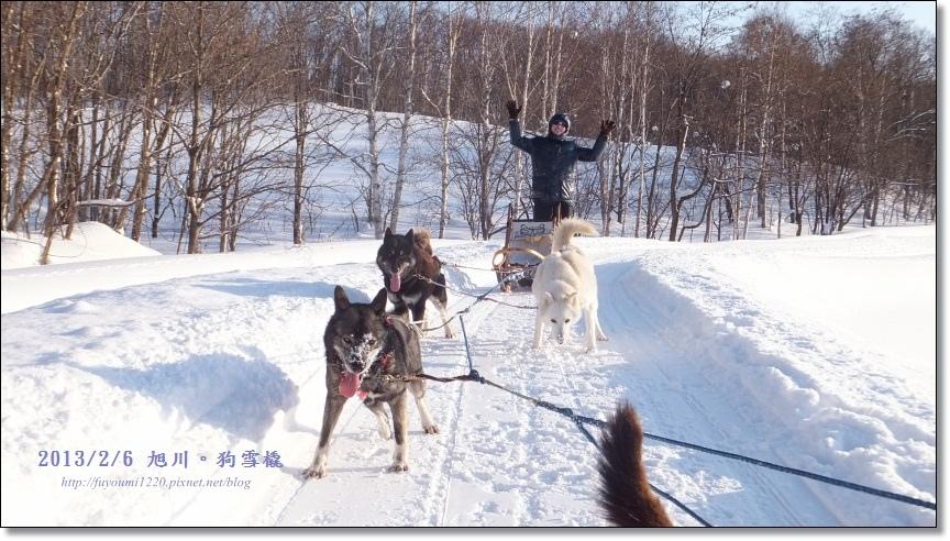 狗雪橇 (23)