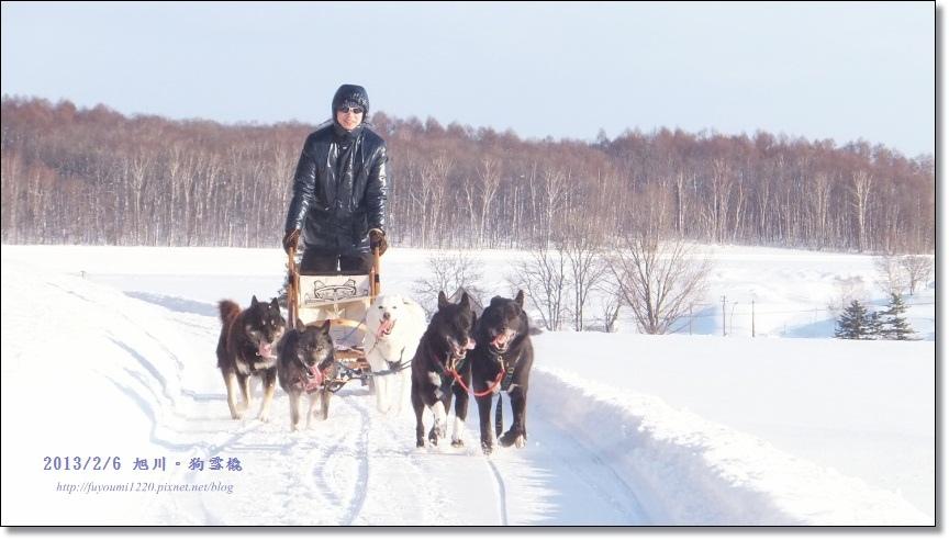 狗雪橇. (1)