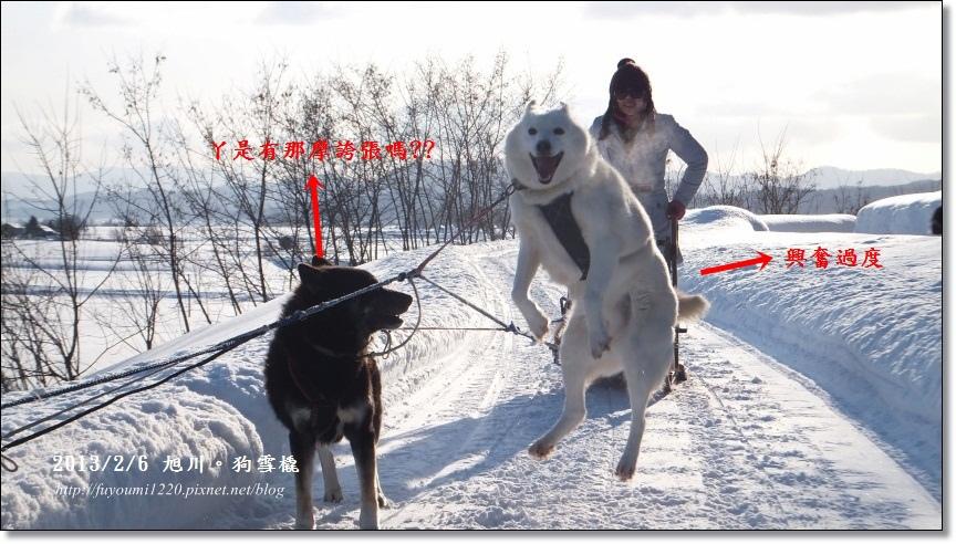 狗雪橇 興奮