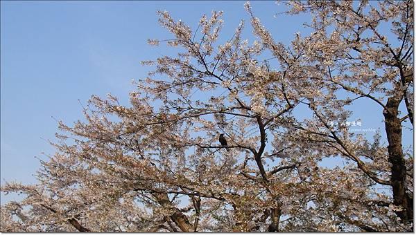 函館漫遊0507 (1).JPG